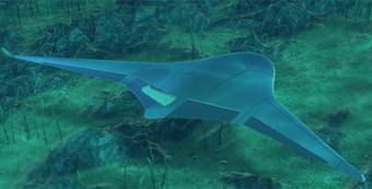 manta-ray-619.png